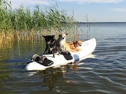 Ferienwohnung Ostseeurlaub Hundeparadies Piratennest Darss Wasse...