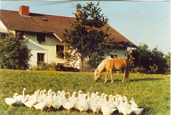 Ferienwohnung Ruhe und Natur Urlaub am Biobauernhof Zimmer Ferie...