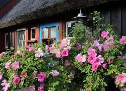 Ferienhaus Kleines Reetdach Ferienhaus, Allein oder zu Zweit im...