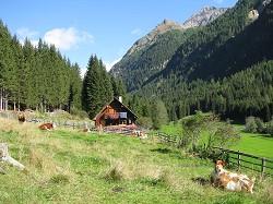 Almhütte Selbstversorgerhütte in Alleinlage in der Ferienregion...