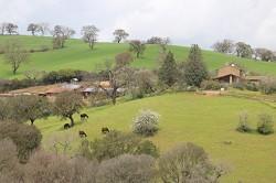Ferienwohnungen Erholung in traumhafter Landschaft mit Reitunter...