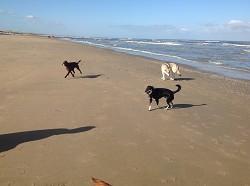 Urlaub mit Hund in Katwijk