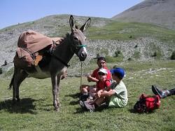 Planwagenurlaub, Eselwandern in Frankreich
